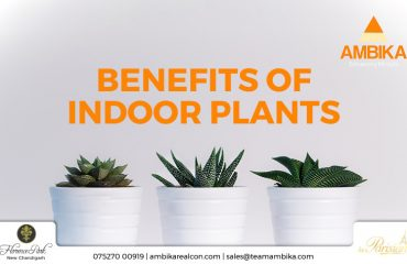 Benefirs of indoor plants