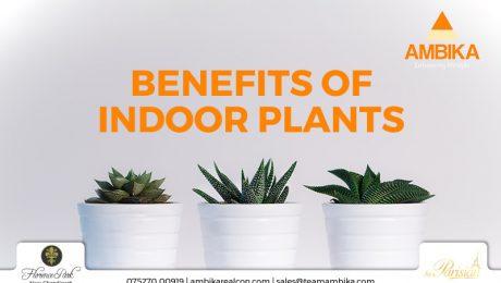 Benefirs of indoor plants