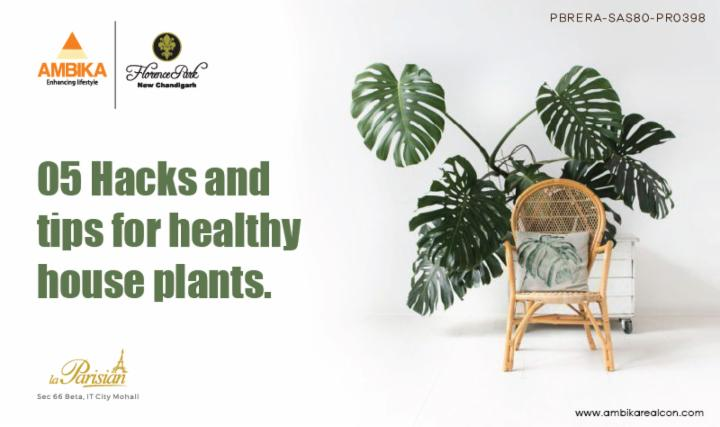 05 Hacks & Tips For Healthy House Plants